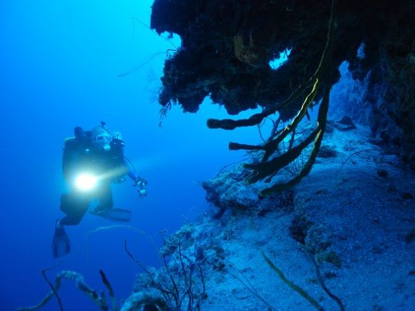 deep-dive-ocean-life_45187_600x450